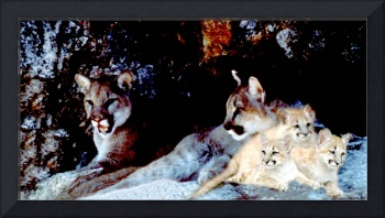 Two mountain lions with their three cubs