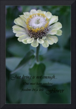 Single zinnia flower with quote