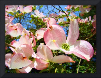 Flowwering Trees art prints Pink Dogwood Flowers