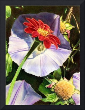 Park Arter_9x12 - Morning Glory Delight - 2010