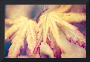 Japanese Maple Leaves with Texture Effect - Natali