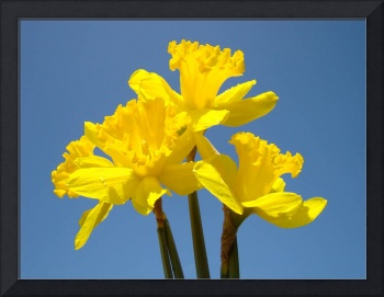 Spring Art Prints Daffodils Flowers Canvas Framed