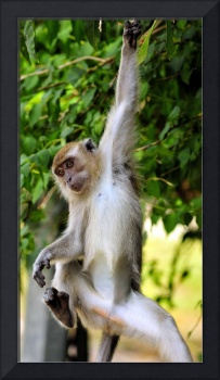 Young Monkey Playing