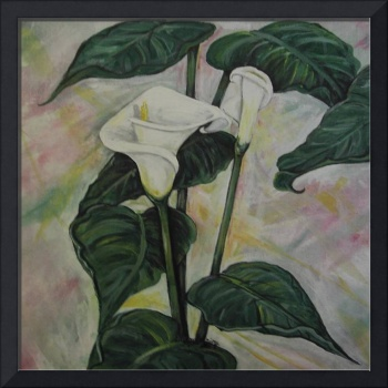 Amanda's cala lilies part two