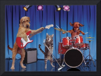 Cats And Dogs In A Band
