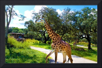 Giraffe | Disney's Animal Kingdom