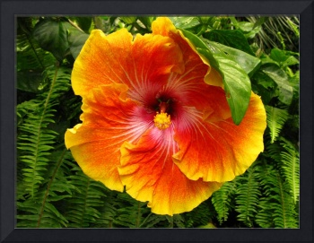Hibiscus with leaf.