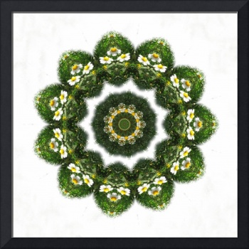 Little White Wildflower Kaleidoscope Art 4