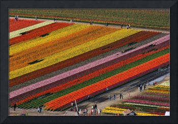 Tulip Town from above