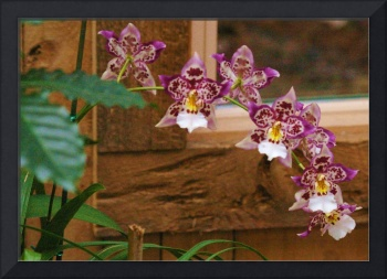 orchids purple and gold