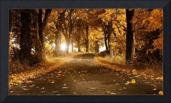 Road Path Strewn With Yellow Leaves In Autumn