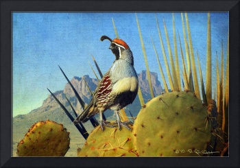 sunset on the desert / gambel's quail