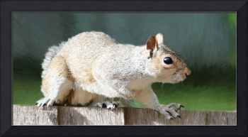 Squirrel - ID 16218-130631-6993