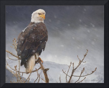 bald eagle getting snowed on