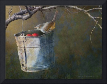 apple bucket, house wren