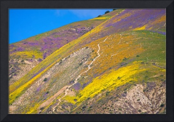 Awash with Wildflowers - Superbloom 2017