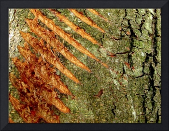 Tree Crust Striped