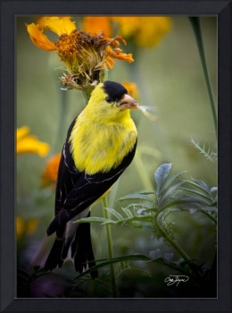 Angel Wing Series Yellow Finch