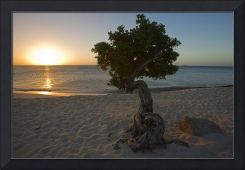 Beach Sunset with a Fofoti Tree, Aruba,