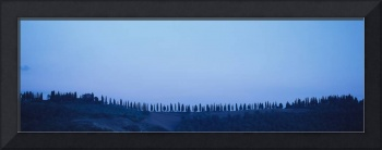Silhouette of cypress trees in a row