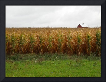 Cornfield and Farmhouse