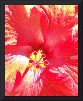 Love of Hibiscus