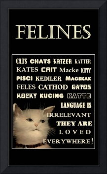 FELINES POSTER - In Any Language Cats are Loved