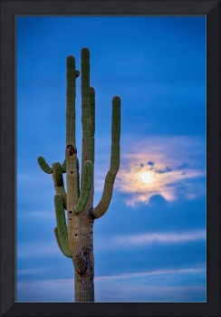 Giant Saguaro Cactus Golden Cloudy Full Moonset