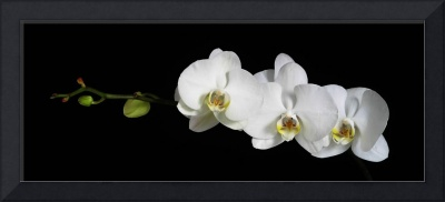 The orchids copy