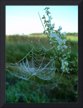Spider Web in Sweet Clover 727