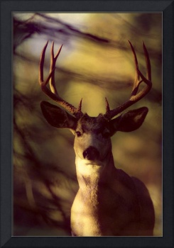 Canada, Rocky Mountains, Mule Deer Close-Up Front