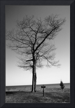 Tree and Great Lake, 2010