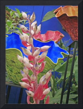 Bromeliad Flower and Glass Vases