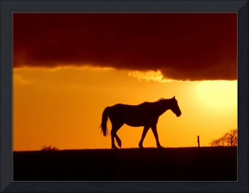 Horse and the sunset