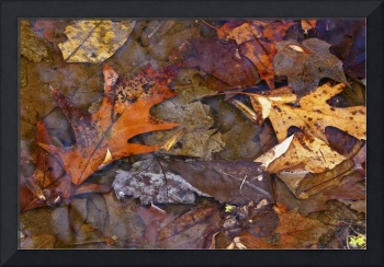 Leaves in a Puddle #1 - Just Before Spring