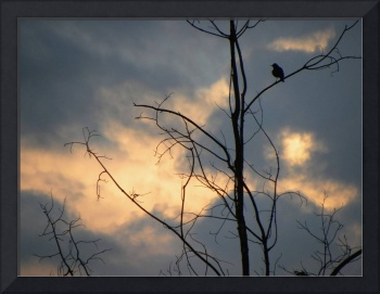 Robin Watching The Sunset