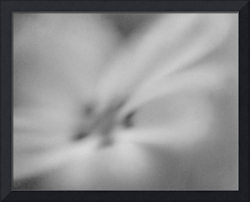 white flower dreamy impressionist photograph