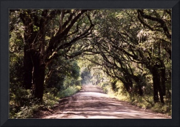 dirt road with oaks