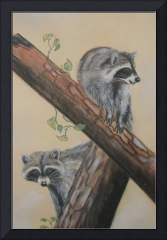 Racoons Up a Tree