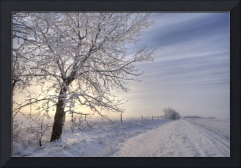 Hoar Frost Covered Tree Along A Snow Covered Road