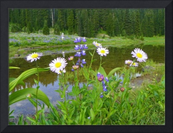 Wildflowers Of Mount Rainier National Park
