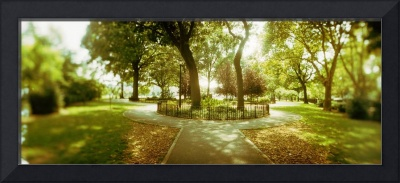 Trees in a park McCarren Park Greenpoint Brooklyn