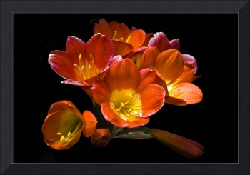 Floral Still Life (Freesia)