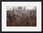 Grassy field in the frost. by Wayne Moran