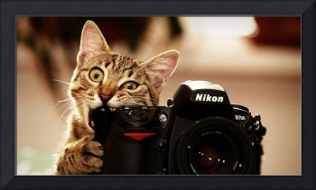 Cats_bite_funny_cameras_nikon_kittens_photo_camera