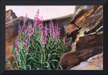 Pocket of Color, Fireweed and Rocks