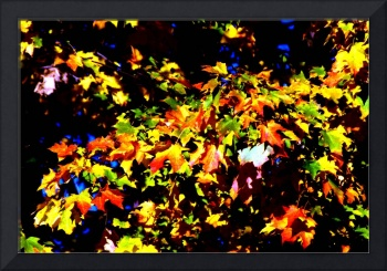 Autumn Leaves, Orange, Yellow, Nature Photography