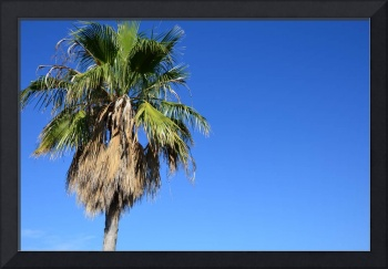 The view of the palm tree