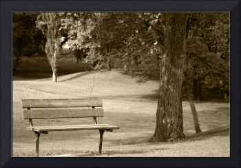 Park Bench in a  Park