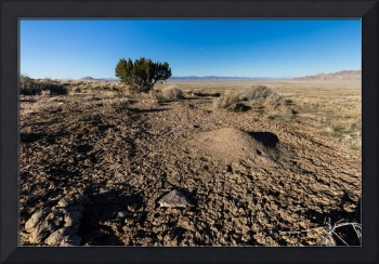 Desert scene with ant hill and mud